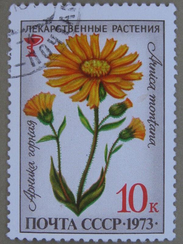 Арника горная (Arnica montana).