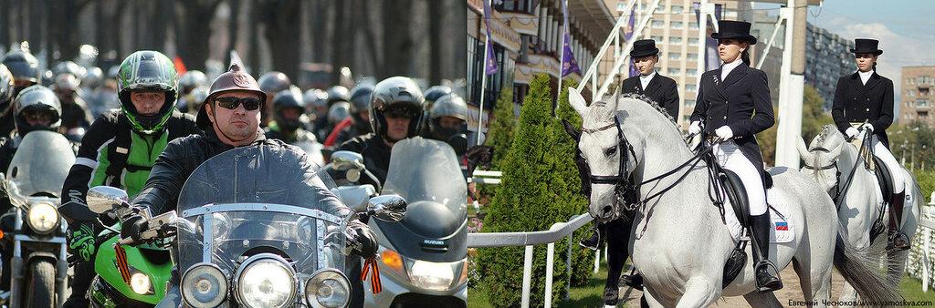 Лошади.02..jpg