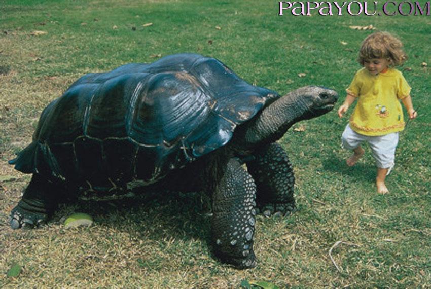 Эти удивительные  черепахи