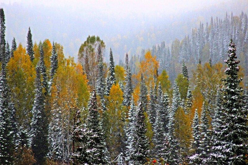 IMG_0219.JPG Ранний снег