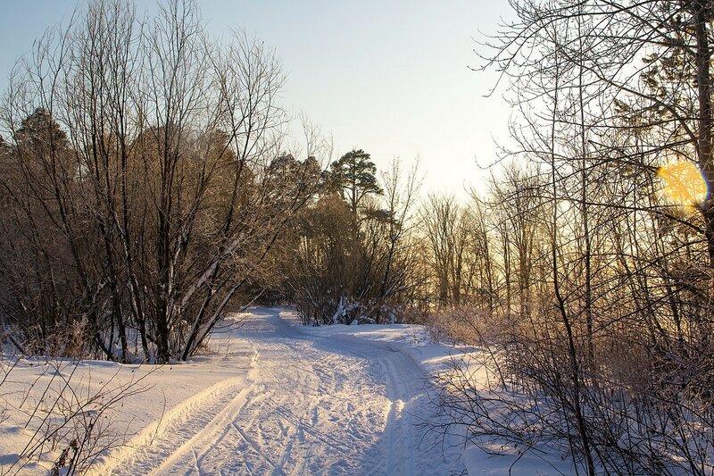 Кусты вдоль лыжни золотятся в солнечном свете в Заречном парке города Кирова