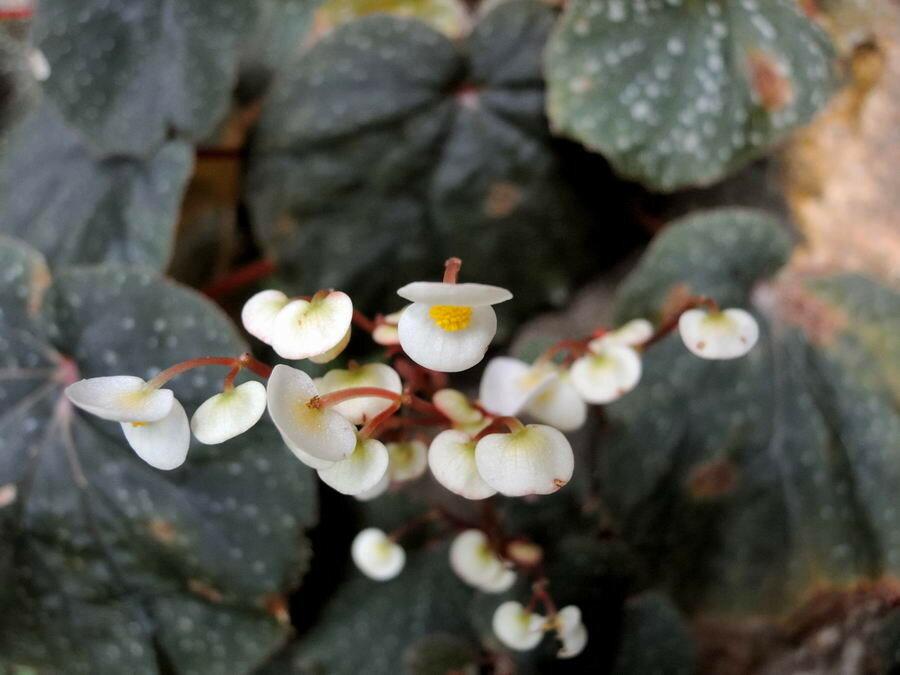 Цветы-фиалки