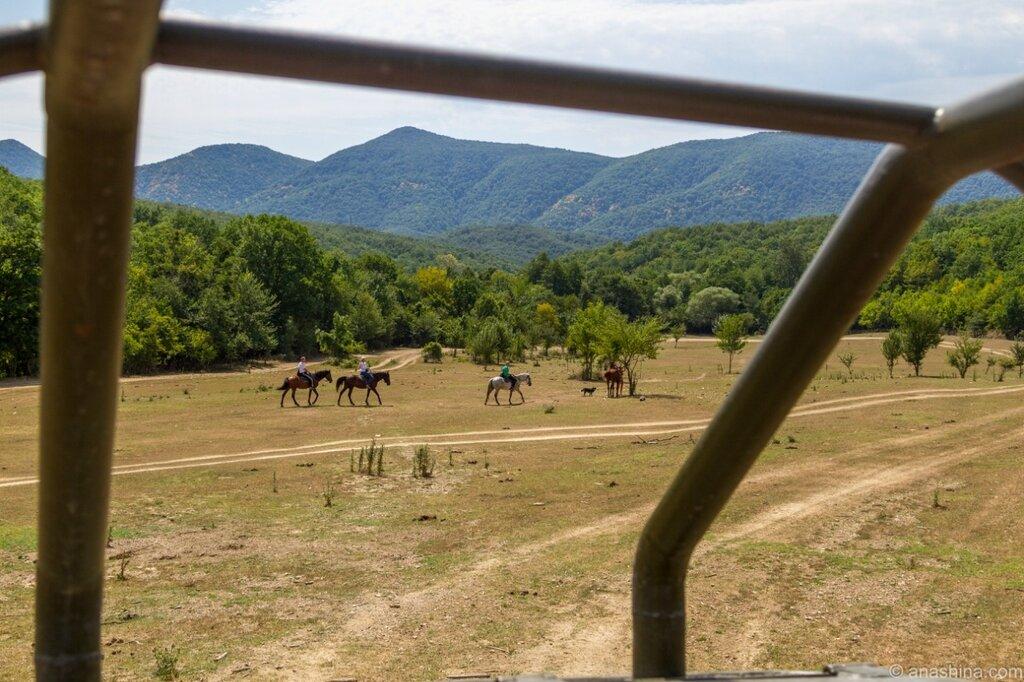 Лошади, Кавказ