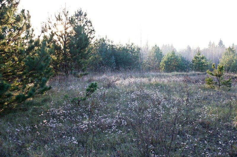 ноябрьские цветы в урочище Симоновка