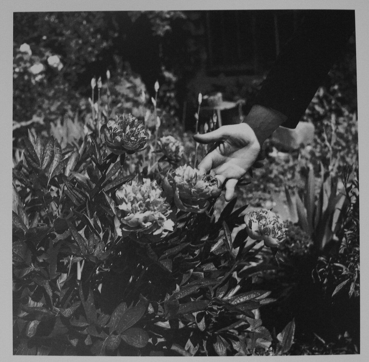 1930. Рука с цветком в саду работника по изготовлению гобеленов