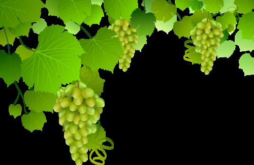 виноград (19).png