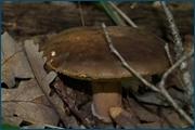 http://img-fotki.yandex.ru/get/15577/15842935.147/0_d0cb0_9e0a2641_orig.jpg