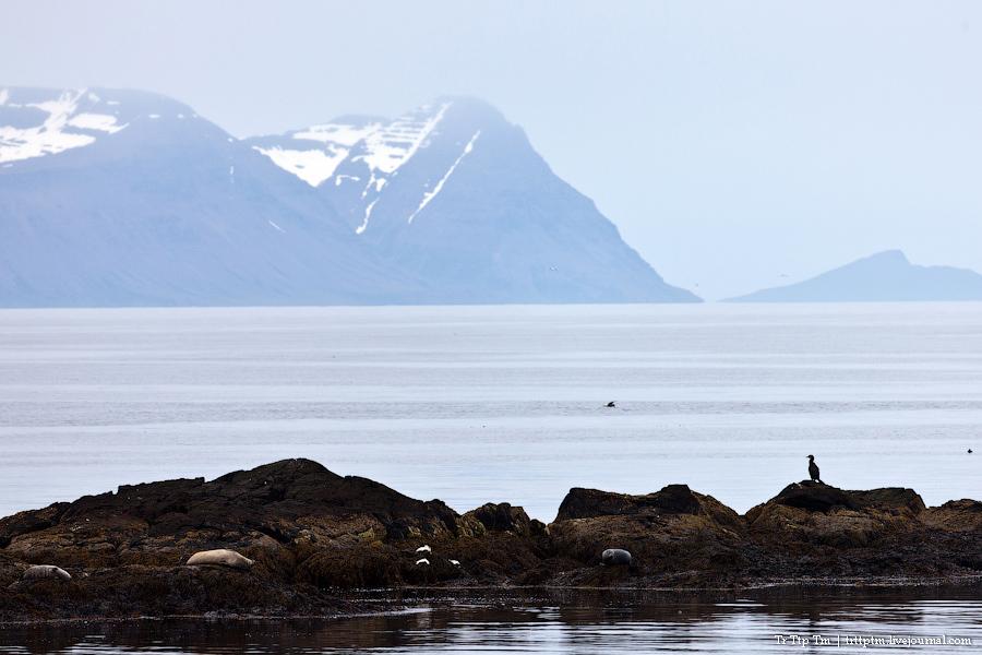 23. Дороги Нордюрланда и киты залива Скъяльфанди.