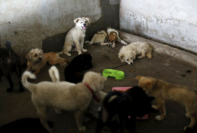 Свежая собачатинка (фото Reuters)