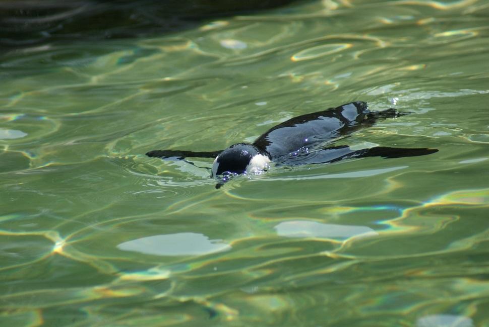 В кадре пингвин