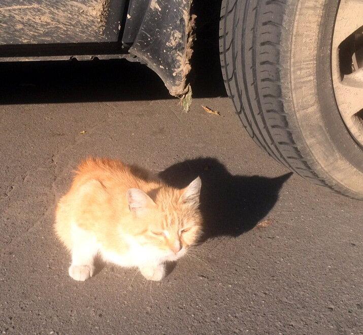 очень солнечный котенок.jpg