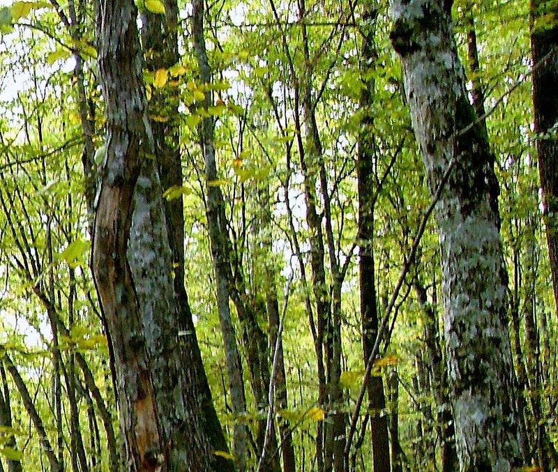 В лесу, под Горячим Ключом, (155).JPG