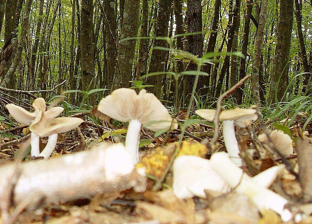 В лесу, под Горячим Ключом,  (156).JPG