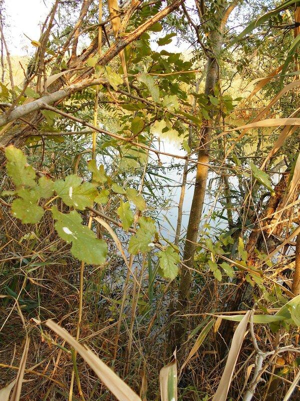 На берегу канала ... DSCN1420.JPG