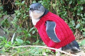 Одежды для пингвинов