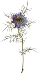 sd_woodland-winter-flower8.png