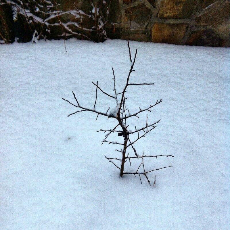 Сад в снегу