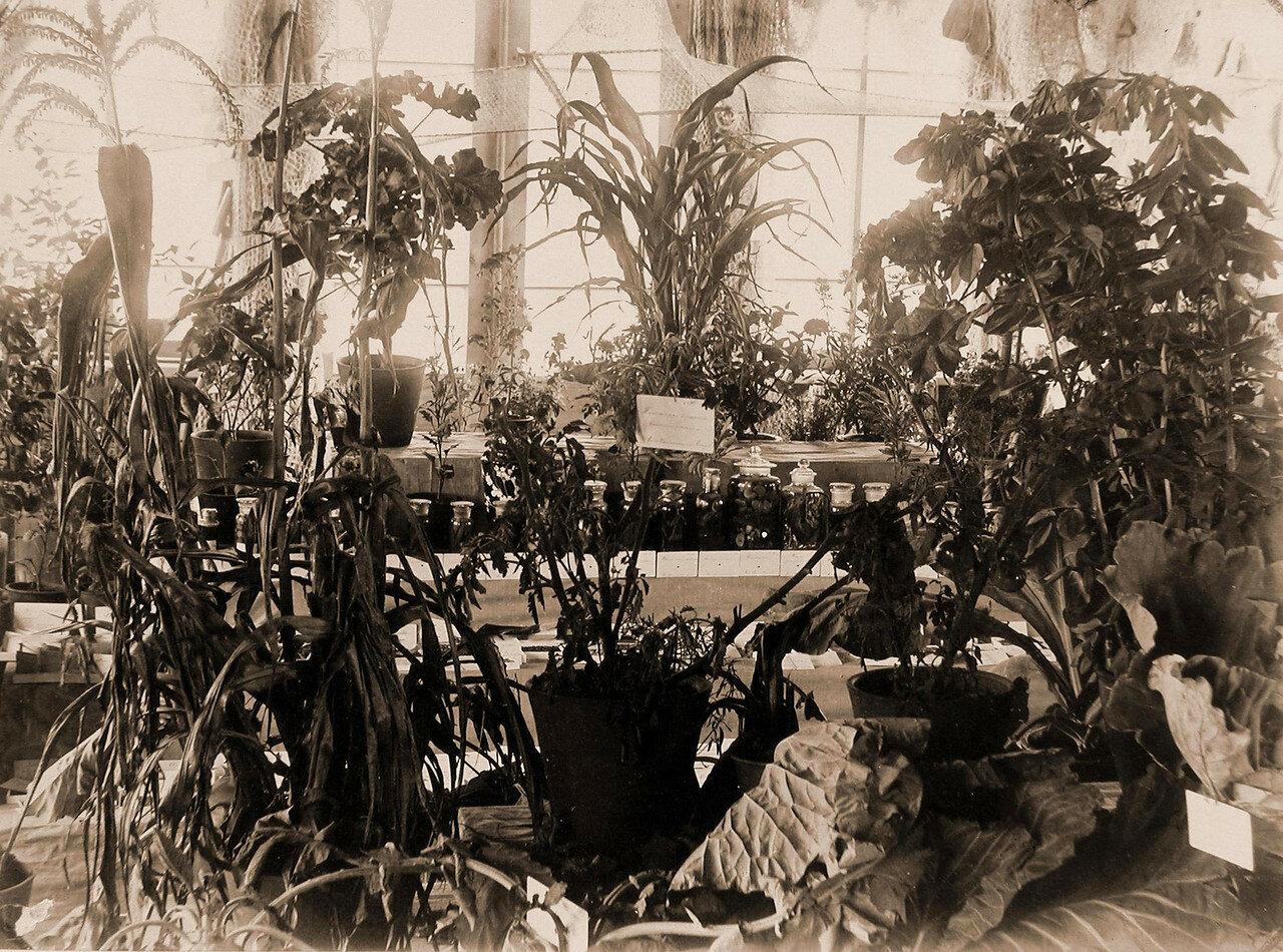 10. Вид части экспонатов по огородничеству