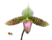 orchid1.png