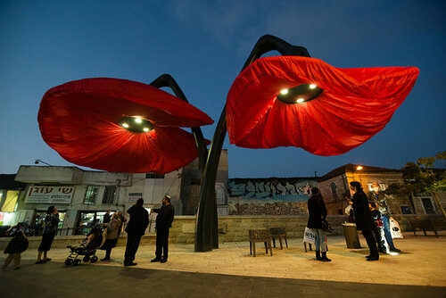 В Иерусалиме зацвели гигантские цветы