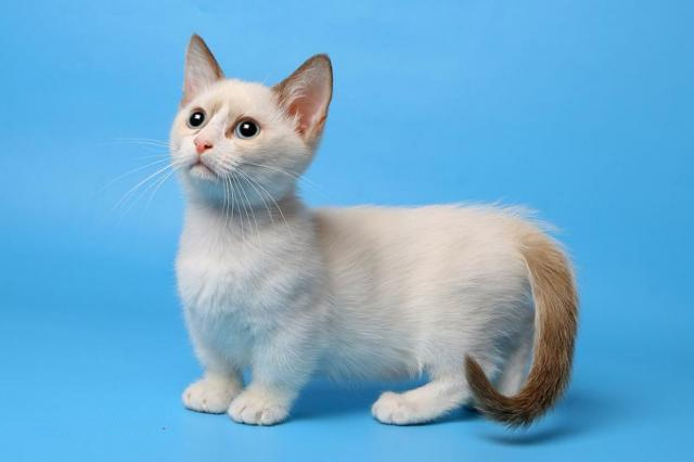 Самые необычные породы кошек