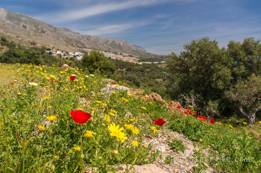 Весенний юг Крита. Недалеко от Хора Сфакион