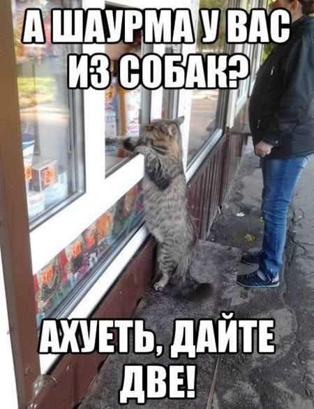 Кот покупает шаурму - фото приколы