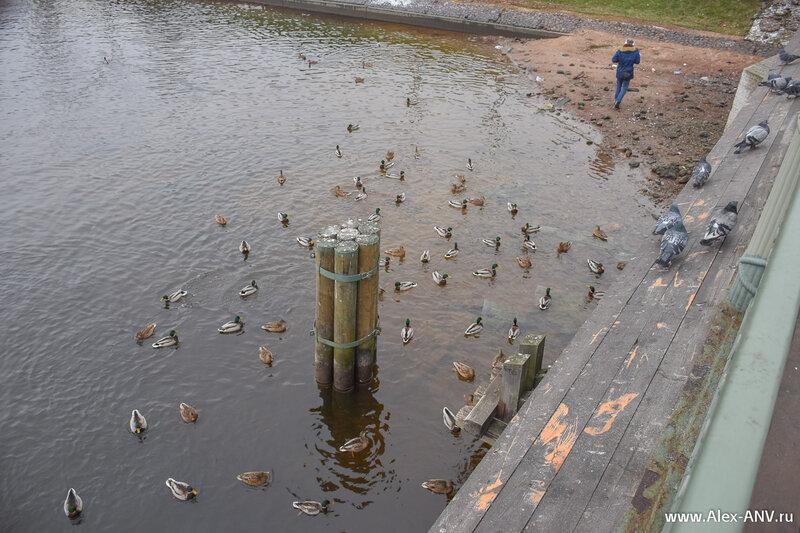 Кроме денег с моста кидают хлебобулочные изделия, на радость  птицам всех мастей.