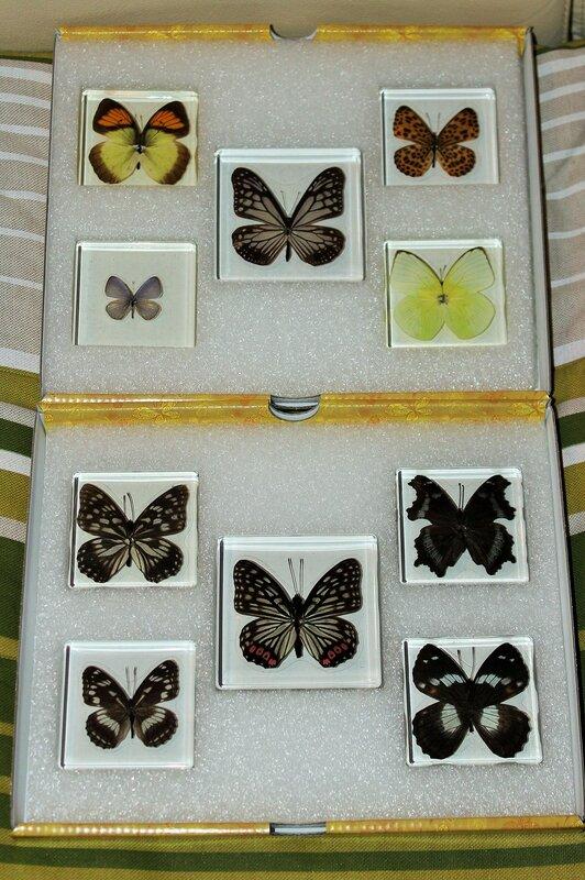 Бабочки №95 - Бабочка радужница (Mimathyma ambica)