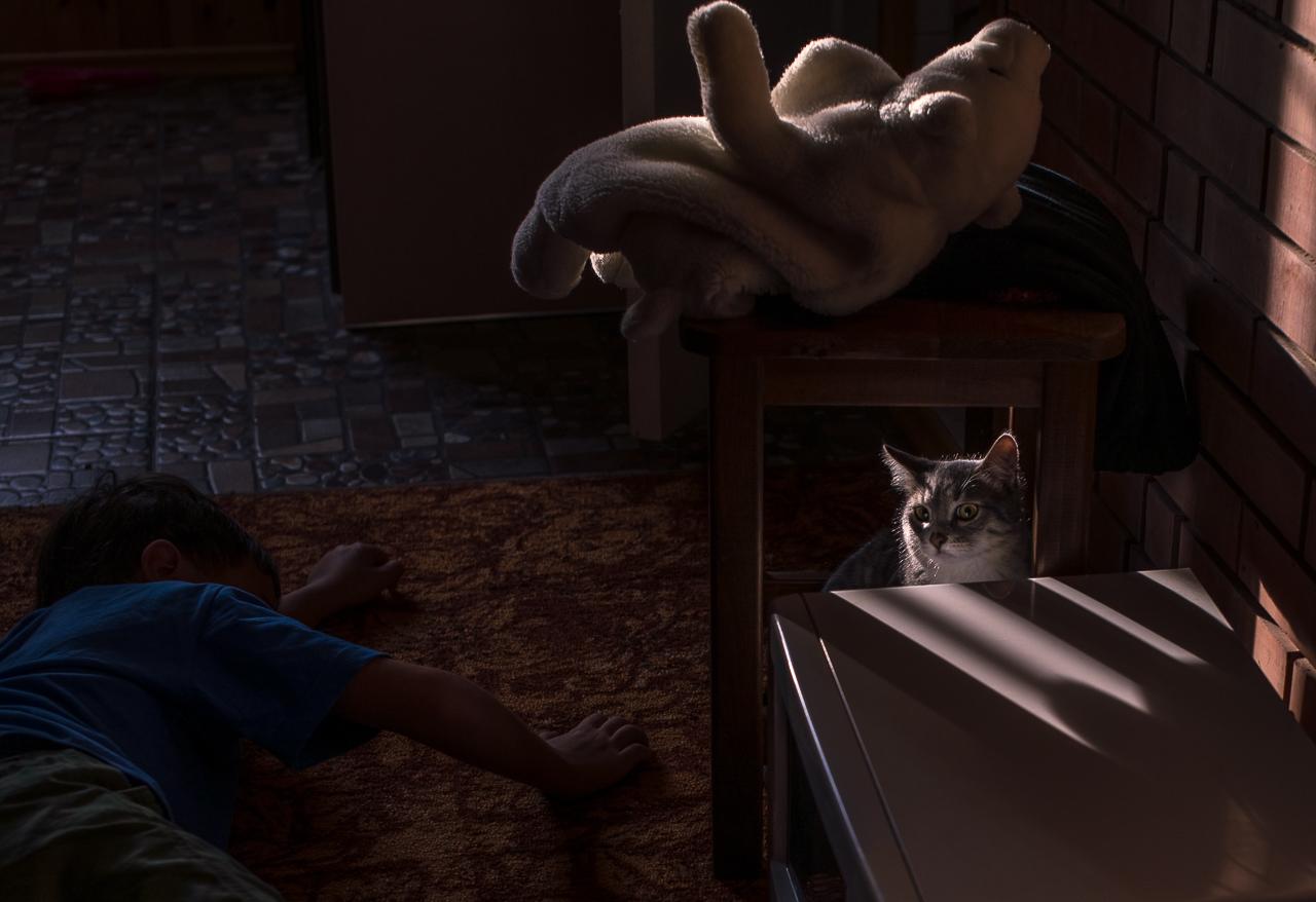 Миша и кот