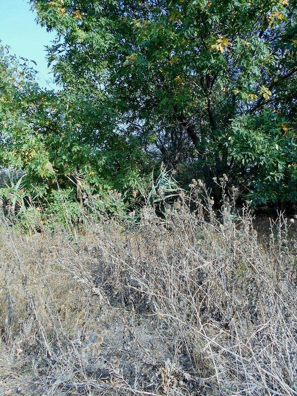 У трав и деревьев ... DSCN1433.JPG