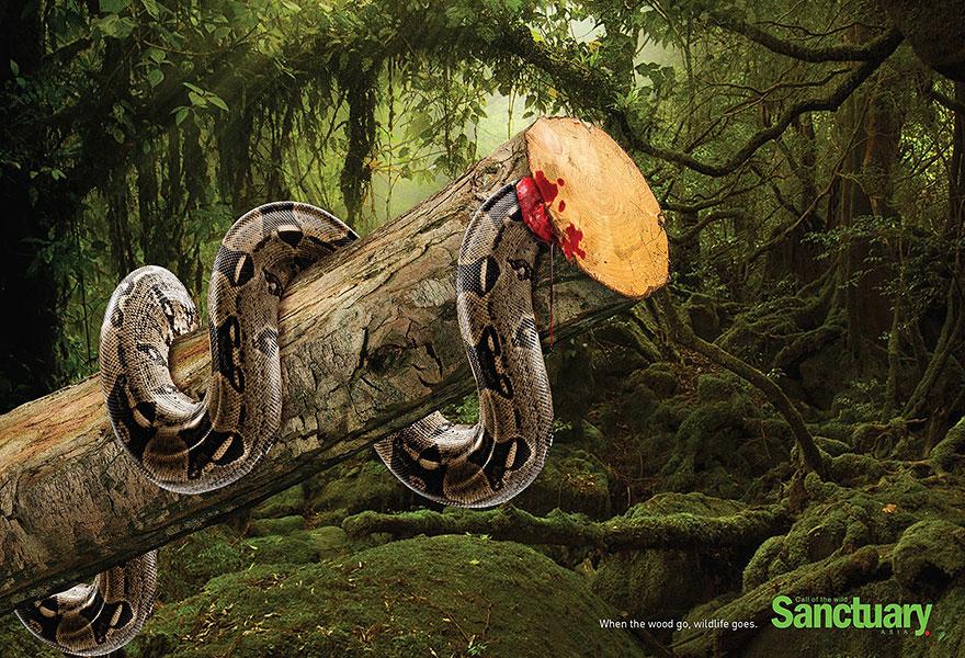 Вырубая леса, убиваем животных