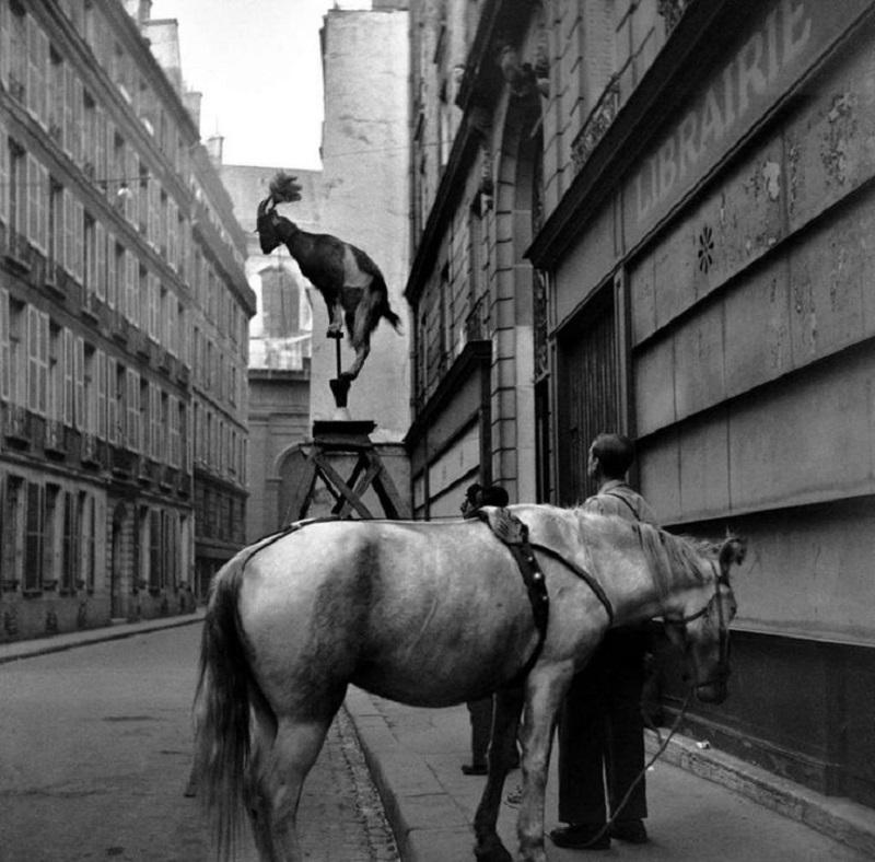 22-3 La chèvre acrobate, devant le 11 rue Servandoni dans le 6ème ©Edouard Boubat, 1948.jpg