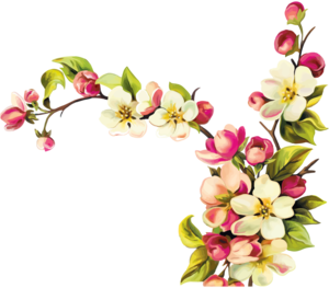 Flowers (2) [преобразованный].png