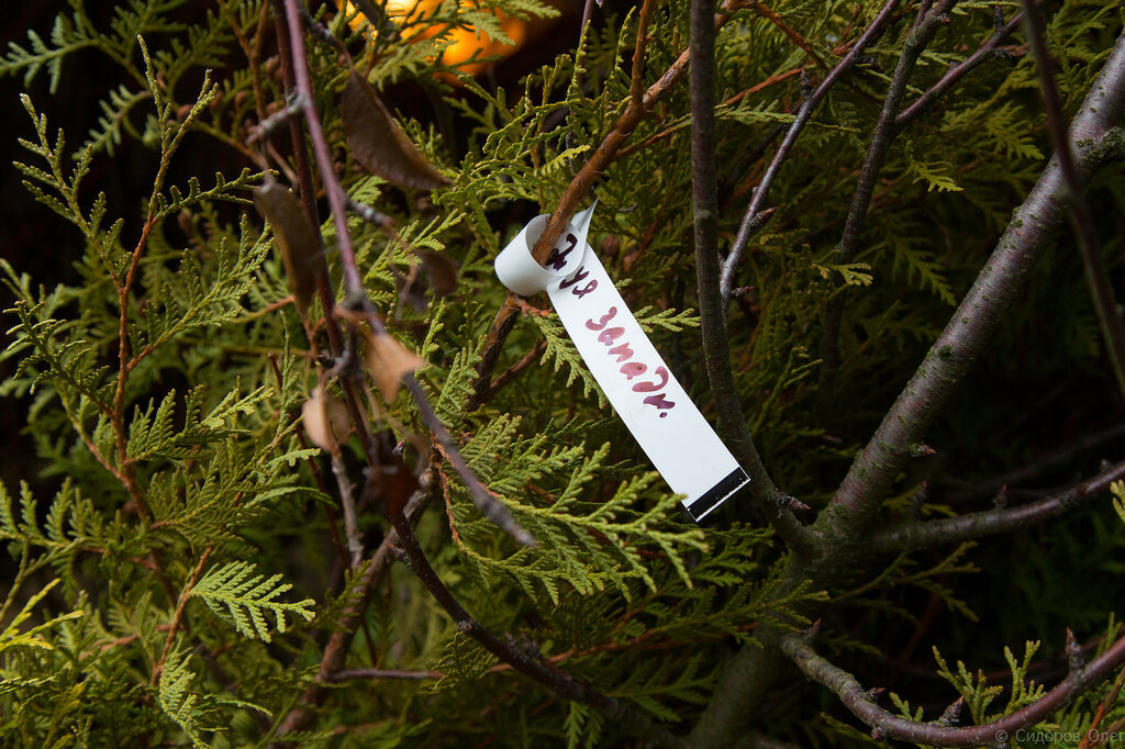 Деревья-28.jpg
