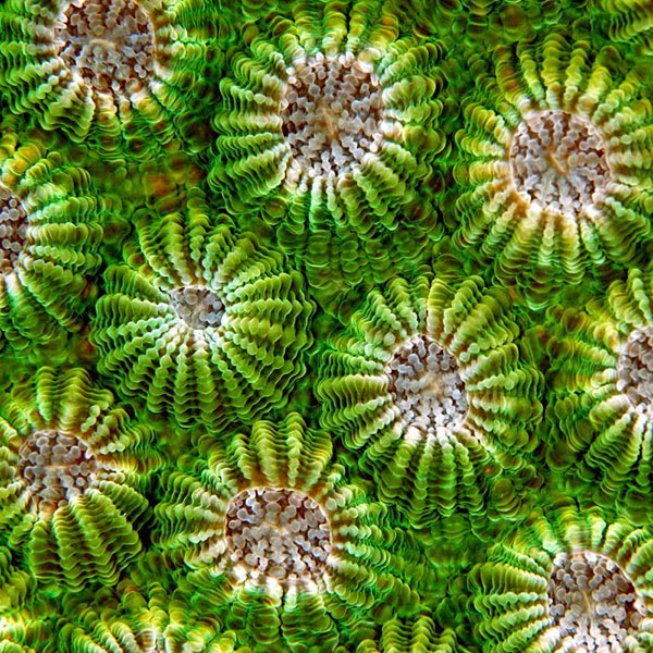 Pattern recognition, Silvie De Burie1280.jpg