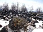 Пенёк на берегу Байкала