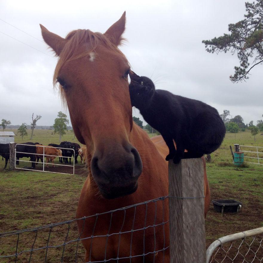 дружба кошки и лошади