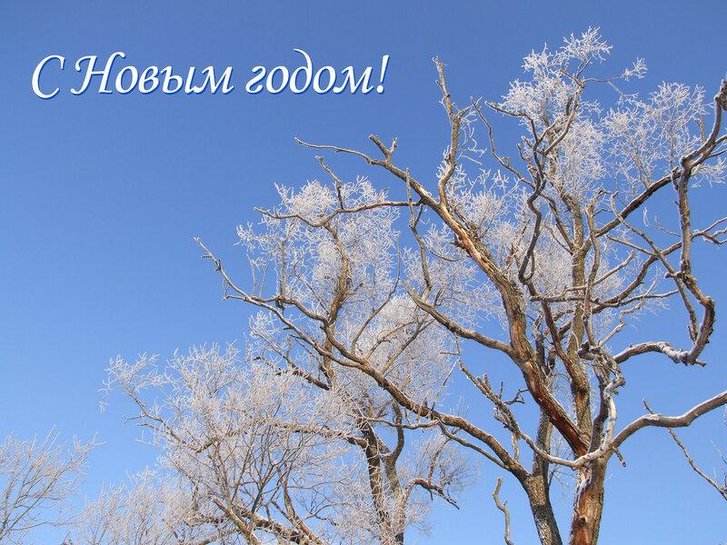 https://img-fotki.yandex.ru/get/15583/4400019.30/0_b9b36_5a8531b9_XL.jpg