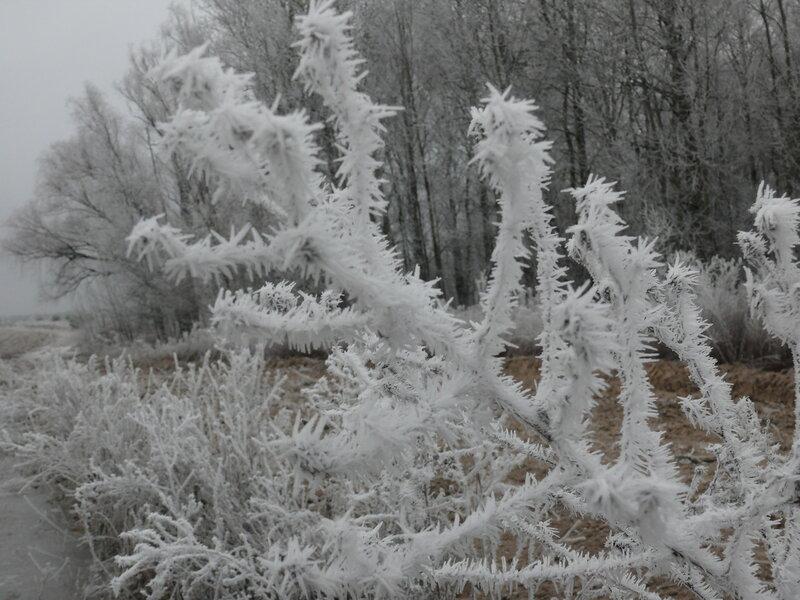 Утро морозное...