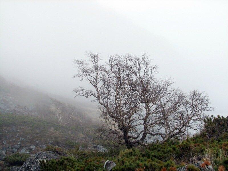 1_дерево берега.jpg