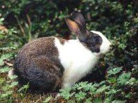 Аудиокнига Практические советы по кролиководству