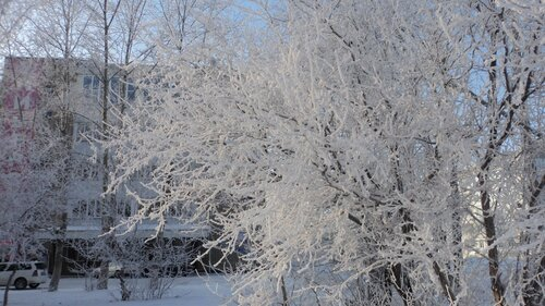 Березы в снегу в Барабинске