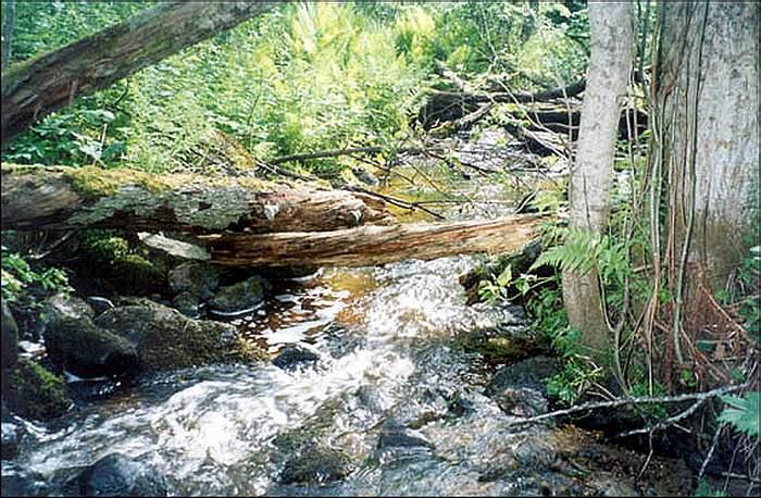 Исток реки Цильна