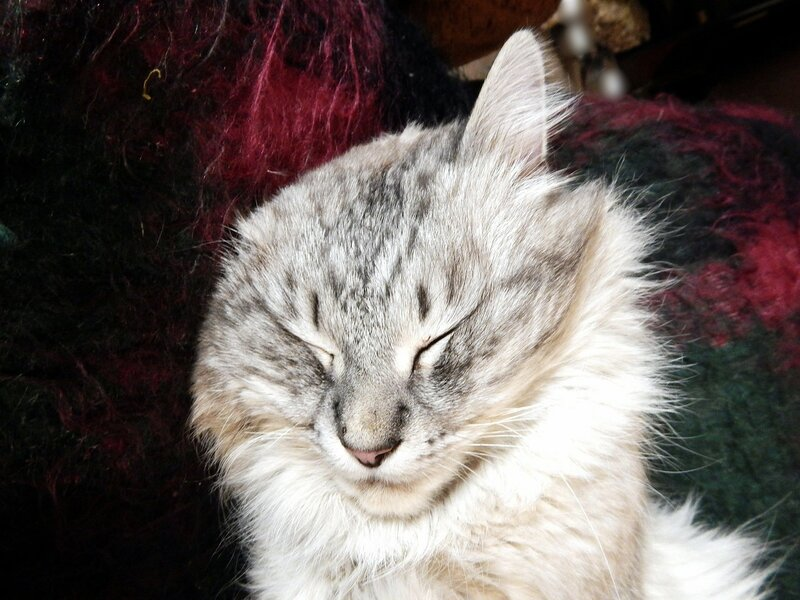 Кот спит, а службу несет!