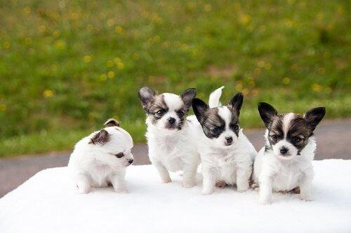 топ-10 кличек собак