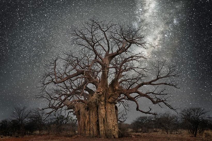 Фотограф Бет Мун: древние деревья Африки под звездным небом 0 13623a ed9f9931 orig