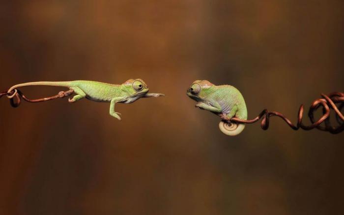 прикольные рептилии