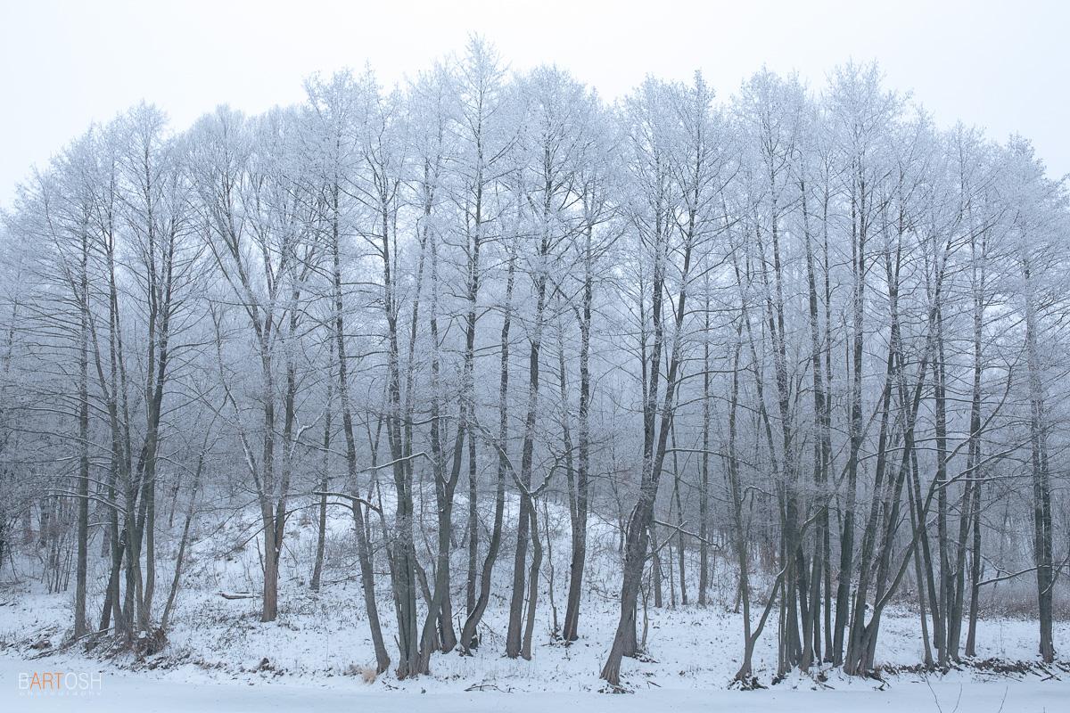 Зима в Пирогово