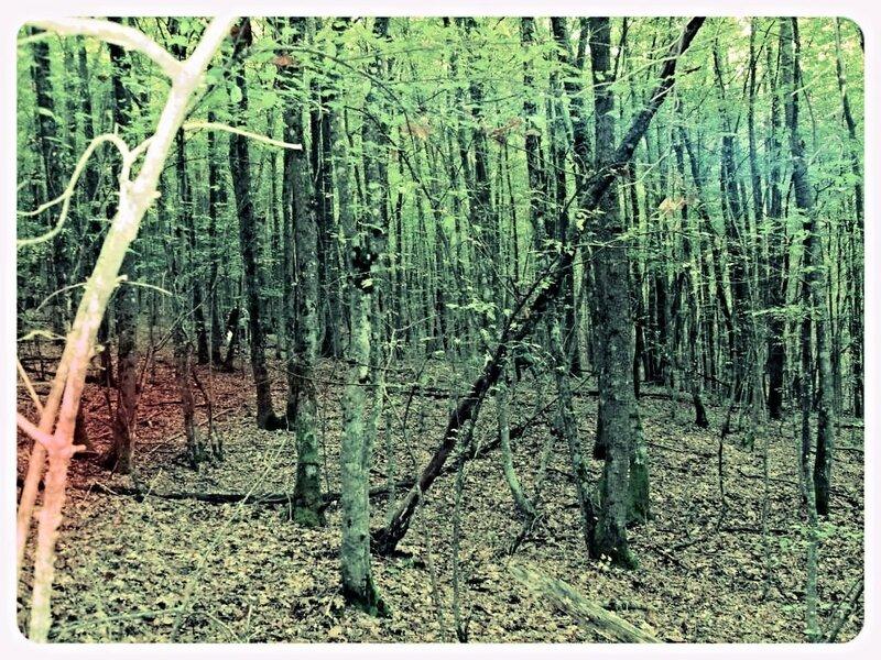 11 октября 2008, под Горячим Ключом, в лесу (5) .JPG